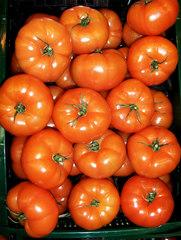 Fleischtomaten - Beeren, Gemüse, Nachtschattengewächs, Tomate, Tomaten, Fleischtomate, Solanum