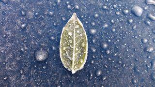 Blatt von Rauhreif überzogen - Blatt, Rauhreif, Kälte, kalt, Frost