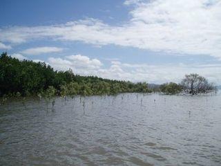 Mangroven 3 - Mangroven, Australien, Ökosystem