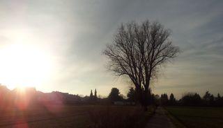 Baum im Abendlicht - Baum, Abendlicht, Sonnenuntergang, Meditation, Abendstimmung, Gegenlicht