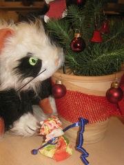 Tinto mit kleinem Weihnachtsbaum - Katze, Kater, Weihnachten, Weihnachtsbaum, freies Schreiben, Schreiben zu Bildern