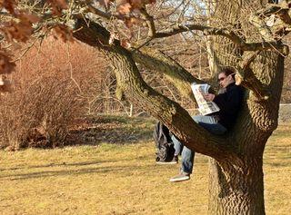 Lesen auf dem Baum  - lesen, klettern, Natur, sitzen, Frühling, Hobby, Entspannung, entspannen, Lesespass, Lesefreude, Zeitung, Lesart, Baumsitzer