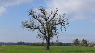 Baum in Landschaft - Wiese, Landschaft, Baum, Meditation, alt, abgestorben, Totholz, Verfall, Wiese, Wolken