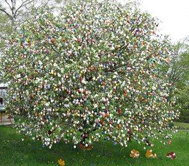 Ostereierbaum  in Saalfeld - Ostern, Brauchtum, Sehenswürdigkeiten, Kurioses, Osterschmuck, Tradition