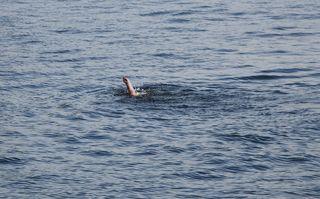 Wasserrettung - Rettung eines Schwimmers #1 - Rettung, Wasser, retten, Ehrenamt, ehrenamtlich, Rettungsschwimmer, helfen, ertrinken, schwimmen, erschöpft, hilflos, Unfall, verunfallt, Not