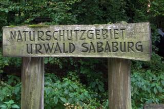 Urwald Sababurg #1 - Hutewald, Naturschutz, Waldbiotop, Landschaftsschutz, Waldgebiet, naturbelassen, Baumriesen, Totholz, sogenannter Urwald, Eichen, Rotbuchen, Reinhardswald, Hofgeismar