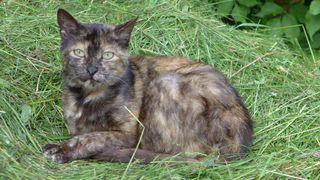 Katze - Tier, Haustier, Katze, Augen, Katzenauge, Schreibanlass