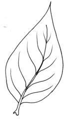 Blatt - Blatt, Blätter, Pflanzen, Pflanzenteile, Herbst, Baum, Anlaut B