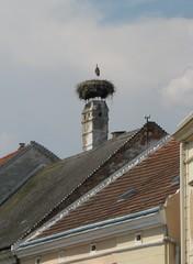 Storchennest - Storch, Nest, Brutstätte, Schornstein, Adebar, Vogel, Schreitvogel, Zugvogel, Weißstorch, Hausdach