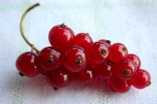 Johannisbeere rot - Johannisbeere, rot, Beeren, Früchte, Obst, Sommer