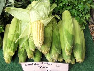 Gemüsemais - Gemüsemais, Mais, Kukuruz, Maiskolben, Kolben, gelb, Pflanze