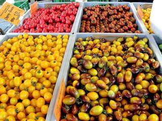 Tomaten #4 - Tomate, Tomaten, Nachtschattengewächs, Vielfalt, Varianten, Sorten
