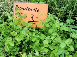 Kräuter #5 Pimpinelle - Pimpinelle, Kleiner Wiesenknopf, Kraut, Gewürz