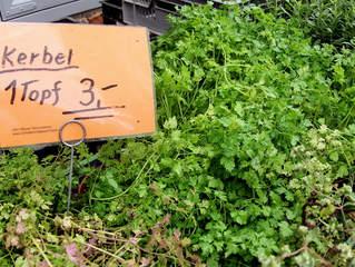 Kräuter #8 Kerbel - Kerbel, Gewürz, Gewürzpflanze, Kraut