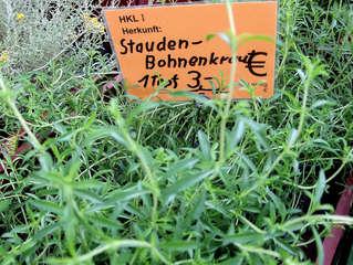 Kräuter #13 Staudenbohnenkraut - Staudenbohnenkraut, Bohnenkraut, Gewürz, Gewürzpflanze, Kraut, Küchenkraut, Tee