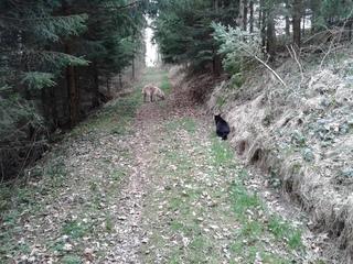 Hund und Kater   #1 - Hund, Katze, Haustier, entdecken, Wald, Waldweg, Erzählanlass, Schreibanlass