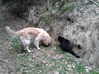 Hund und Kater   #2 - Hund, Katze, Haustier, entdecken, Wald, Waldweg, Erzählanlass, Schreibanlass