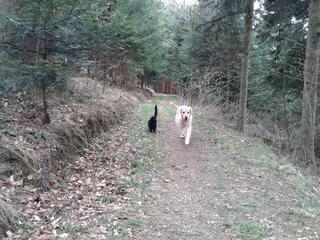 Hund und Kater   #3 - Hund, Katze, Haustier, entdecken, Wald, Waldweg, Erzählanlass, Schreibanlass