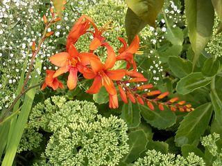 Sommerblüten - Blüten, grün, rot, orange, Sommer, Blüte, Blüten, blühen, gestalten