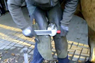 Hufschmied bei der Arbeit #2 - Hufschmied, Schmied, Hufeisen, Werkzeug, Handwerk, Pferd, Hufpflege, raspeln, beschlagen, feilen, Nägel, Kaltbeschlag