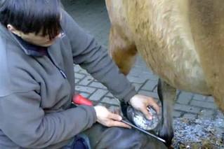 Hufschmied bei der Arbeit #5 - Hufschmied, Schmied, Hufeisen, Werkzeug, Handwerk, Pferd, Hufpflege, raspeln, beschlagen, feilen, Nägel, Kaltbeschlag