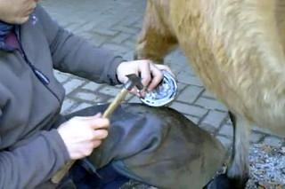 Hufschmied bei der Arbeit #6 - Hufschmied, Schmied, Hufeisen, Werkzeug, Handwerk, Pferd, Hufpflege, raspeln, beschlagen, feilen, Nägel, Kaltbeschlag