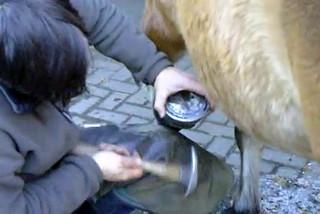 Hufschmied bei der Arbeit #7 - Hufschmied, Schmied, Hufeisen, Werkzeug, Handwerk, Pferd, Hufpflege, raspeln, beschlagen, feilen, Nägel, Kaltbeschlag