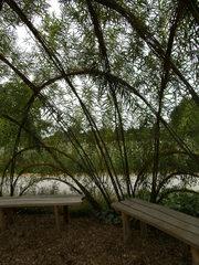 Weidenpavillon#4 - Weidenpavillon, Weiden, Weide, Grünbauwerk, Laube, Treffpunkt, grünes Klassenzimmer, Pausenlaube