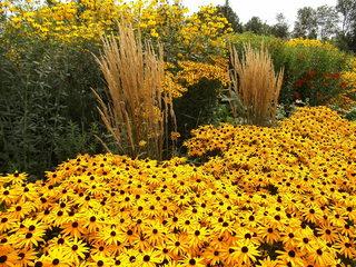 Staudenbeet#4 - Sommer, Blume, Blumen, Sommerblumen, Kunst, Farbenlehre, Gartenanlage, Beet, Blumenbeet