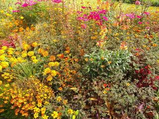 Staudenbeet#3 - Sommer, Blume, Blumen, Sommerblumen, Kunst, Farbenlehre, Gartenanlage, Beet, Blumenbeet