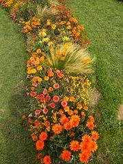 Staudenbeet#2 - Sommer, Blume, Blumen, Sommerblumen, Kunst, Farbenlehre, Gartenanlage, Beet, Blumenbeet