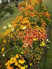 Staudenbeet#1 - Sommer, Blume, Blumen, Sommerblumen, Kunst, Farbenlehre, Gartenanlage, Beet, Blumenbeet