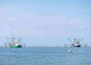 Fischkutter vor Sandbank - Nordsee, Fischerei, Garnelen, Plattfische, Scholle, Seezunge, Grundschleppnetz, Baum, Baumkurre, Tourismus