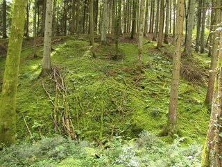 Totholz - Totholz, Baum, Baumstamm, Veränderung, Bewachsung, Moos, überwachsen, verrotten, Kreislauf, Stoffkreislauf, Zersetzer, Bewuchs, Wald, Urwald