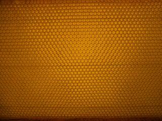 Bienenwabe #2 - Biene, Bienenstock, Honig, Wabengebilde, Zellen, Bienenhaltung, Wabe, Bienenwabe, Imkerei