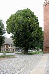 Treuenbrietzen, Luther-Linde - Luther, Linde, Reformation, Rede, Predigt, Treuenbrietzen, Ablass, Ablasshandel