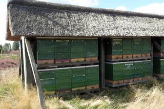 Bienenzaun #3 - Bienen, Bienenstock, Immenzaun, Beute, Bienenkasten, Behausung, Schwarm, Imme, Imkerei, Bienenvolk, Imker, Heide, Heideblüte, Heidehonig