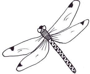 Libelle - Illustration, Libelle, Anlaut L, fliegen, Drachenfliege, Hautflügel, Insekt