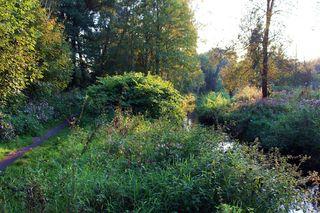 Zwei Wege - Ethik, Herbst, herbstlich, Weg, Wege, entscheiden, Entscheidung, Entscheidungen, Meditation, Perspektive, Perspektivwechsel, bunt, Wasserweg, Wasser, Fluß, Landweg, Fußweg, Impression