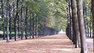 Allee - Allee, Weg, Bäume, symmetrisch, Symmetrie, Perspektive, Fluchtpunkt, Blätter, gerade, Ruhe, Meditation, Herbst