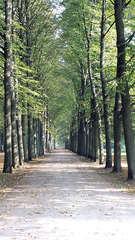 Allee - Allee, Weg, Bäume, symmetrisch, Symmetrie, Perspektive, Fluchtpunkt, Blätter, gerade, Ruhe, Meditation