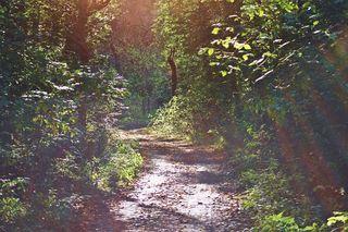 Wege #11 - Weg, Wege, Pfad, Pfade, steinig, gradlinig, Meditation, Bildimpuls, Licht, Landschaft, Meditation, lichtdurchflutet, herbstlich, Herbst