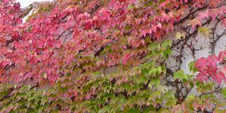 Herbstlaub - Herbst, Laub, Herbstlaub, bunt, Blätter, herbstlich, farbenfroh