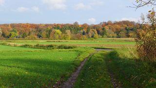 Herbstlandschaft #1 - Herbst, Bäume, Natur, Ruhe, Ernte, Acker, Blätter, Herbst, Laub, Laubfall, Herbstlaub, herbstlich, Jahreszeiten, Vergänglichkeit, Schreibanlass, Meditation, Weg