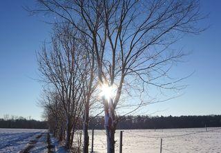 Winterlandschaft  - Winter, Winterlandschaft, Bäume, Baum, kalt, sonnig, Wintersonne