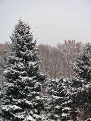 typisch Winter 4# - Winter, Frost, Eis, Wasser, Schnee, frieren, gefroren, zugefroren, Dichte, Physik, Aggregatzustand, Anomalie, Eindruck, kalt, Impression, Jahreszeit, Wettererscheinung, Licht, Schatten, kalt, Kälte, winterlich, frostig, schneien, Tanne, immergrün