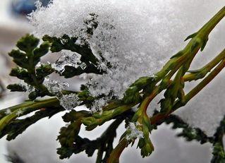 typisch Winter 5# - Winter, Frost, Eis, Wasser, Schnee, frieren, gefroren, zugefroren, Dichte, Physik, Aggregatzustand, Anomalie, Eindruck, kalt, Impression, Jahreszeit, Licht, kalt, Kälte, winterlich, frostig, Schneekristalle, Detaiaufnahme, Kristall, Struktur, Eiskristall, Schneekristall