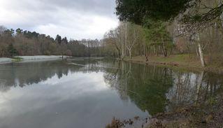 Winterlandschaft - Winter, See, Eis, kalt, Spiegelung, Landschaft, eisig, Waldsee