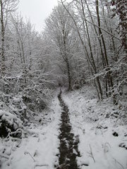 Waldweg im Winter - Wald, Waldweg, Weg, Pfad, Winter, Schnee, verschneit, unbelaubt, romantisch, einsam, Laubbäume