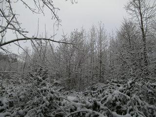Schnee im Wald#1 - Baum, kahle Bäume, kahl, unbelaubt, Winter, Landschaft, Winterlandschaft, Schneelandschaft, Schnee, Schneedecke, verschneit, Kälte, Einsamkeit, Ruhe, Stille, Schreibanlass, Meditation